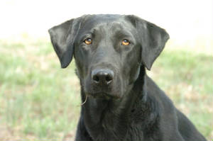 alleyworried.jpg